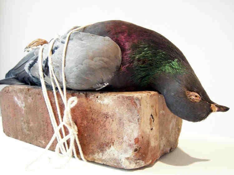 pigeon_brick.jpg